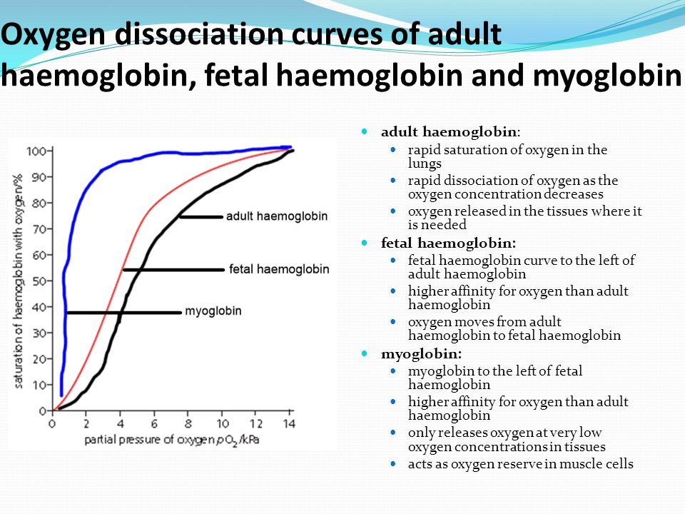 Oxygen dissociation curves of adult haemoglobin, fetal haemoglobin and myoglobin