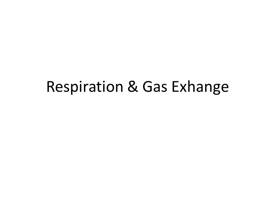 Respiration & Gas Exhange