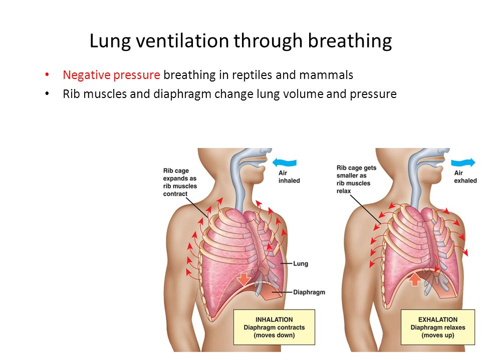 Lung ventilation through breathing