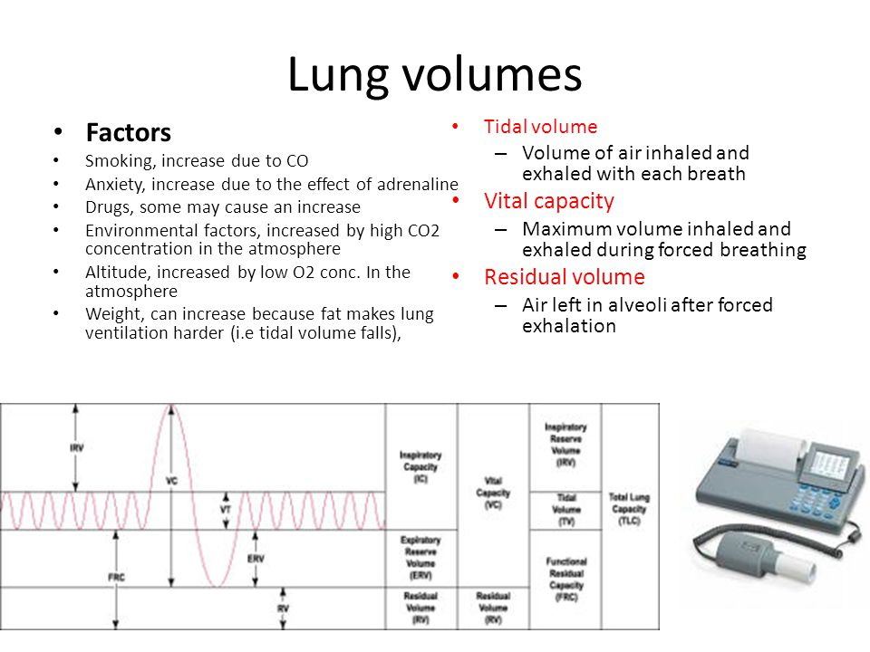 Lung volumes Factors Vital capacity Residual volume Tidal volume