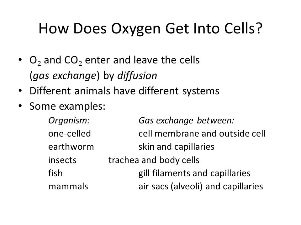 How Does Oxygen Get Into Cells