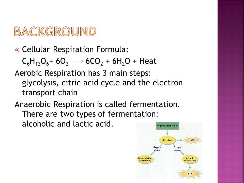 Background Cellular Respiration Formula: