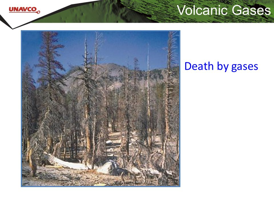 Volcanic Gases Death by gases