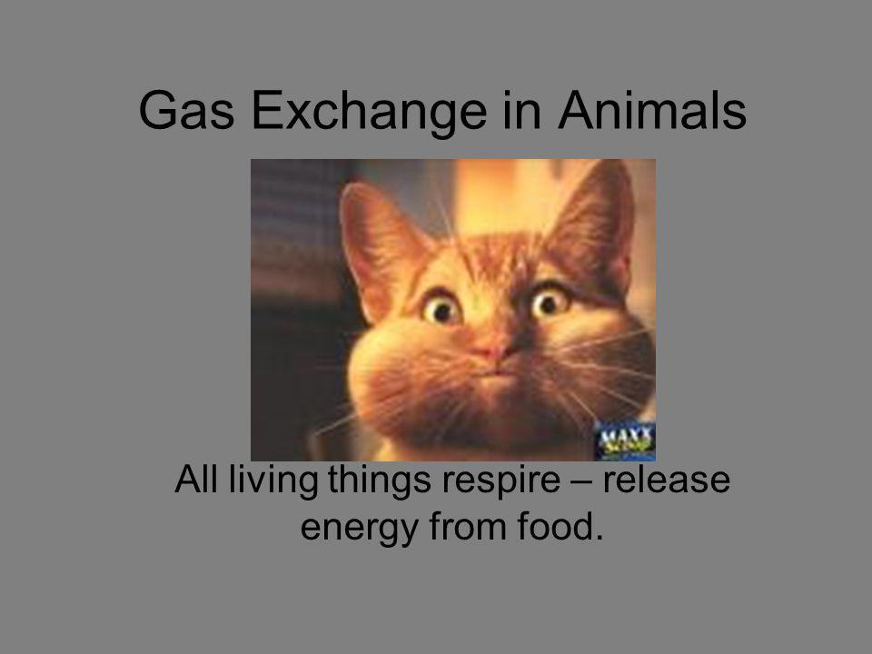 Gas Exchange in Animals
