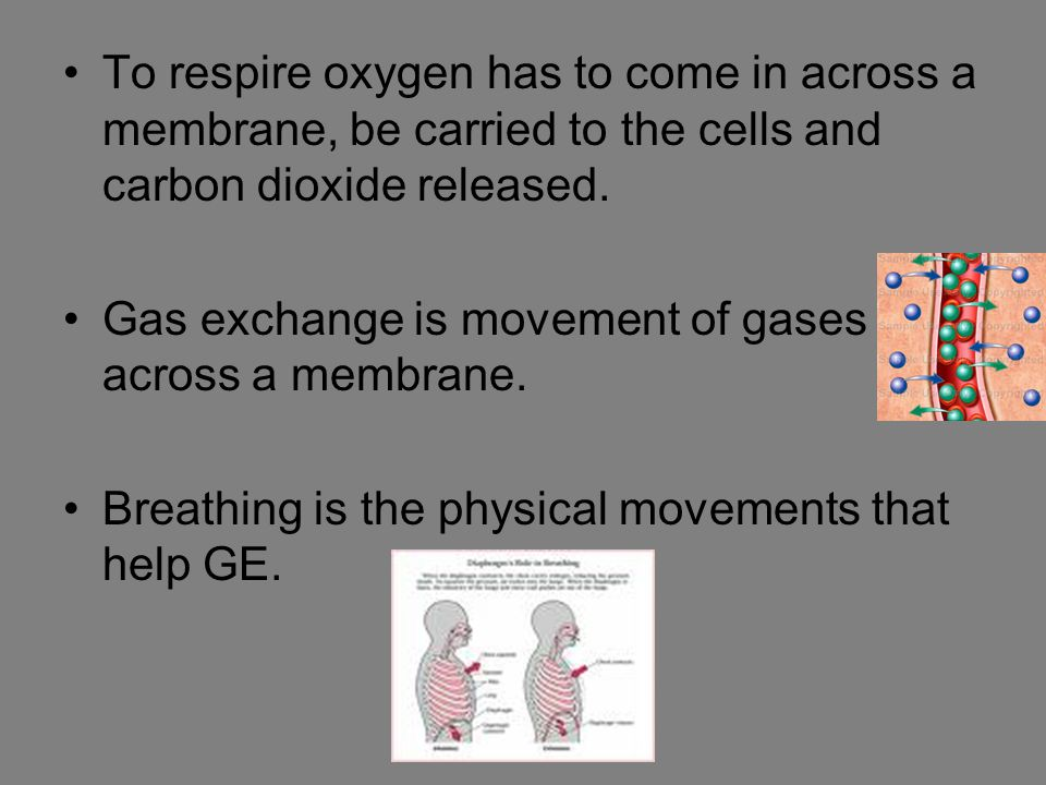 To respire oxygen has to come in across a membrane, be carried to the cells and carbon dioxide released.