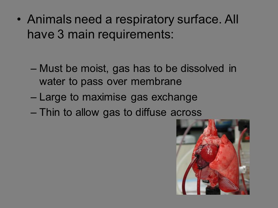 Animals need a respiratory surface. All have 3 main requirements: