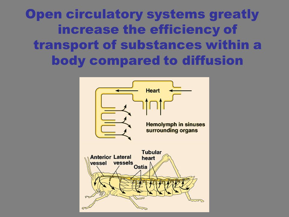 Open circulatory systems greatly increase the efficiency of transport of substances within a body compared to diffusion