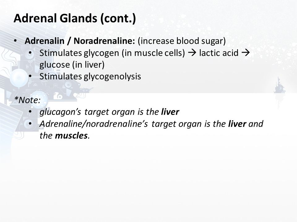 Adrenal Glands (cont.) Adrenalin / Noradrenaline: (increase blood sugar) Stimulates glycogen (in muscle cells)  lactic acid  glucose (in liver)