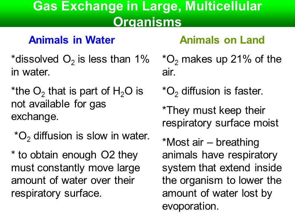 Gas Exchange in Large, Multicellular Organisms