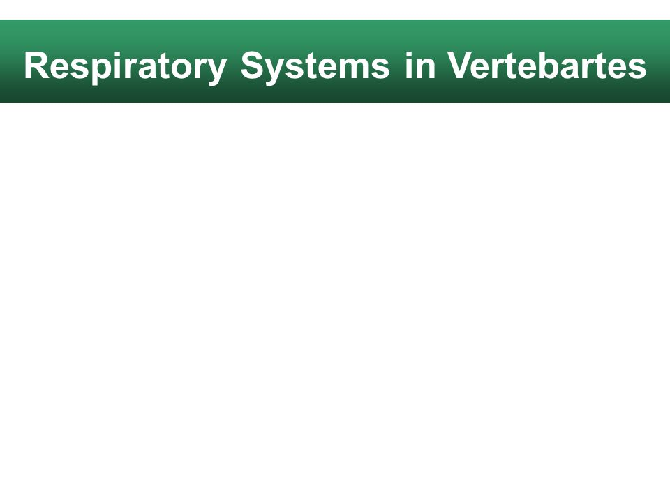 Respiratory Systems in Vertebartes