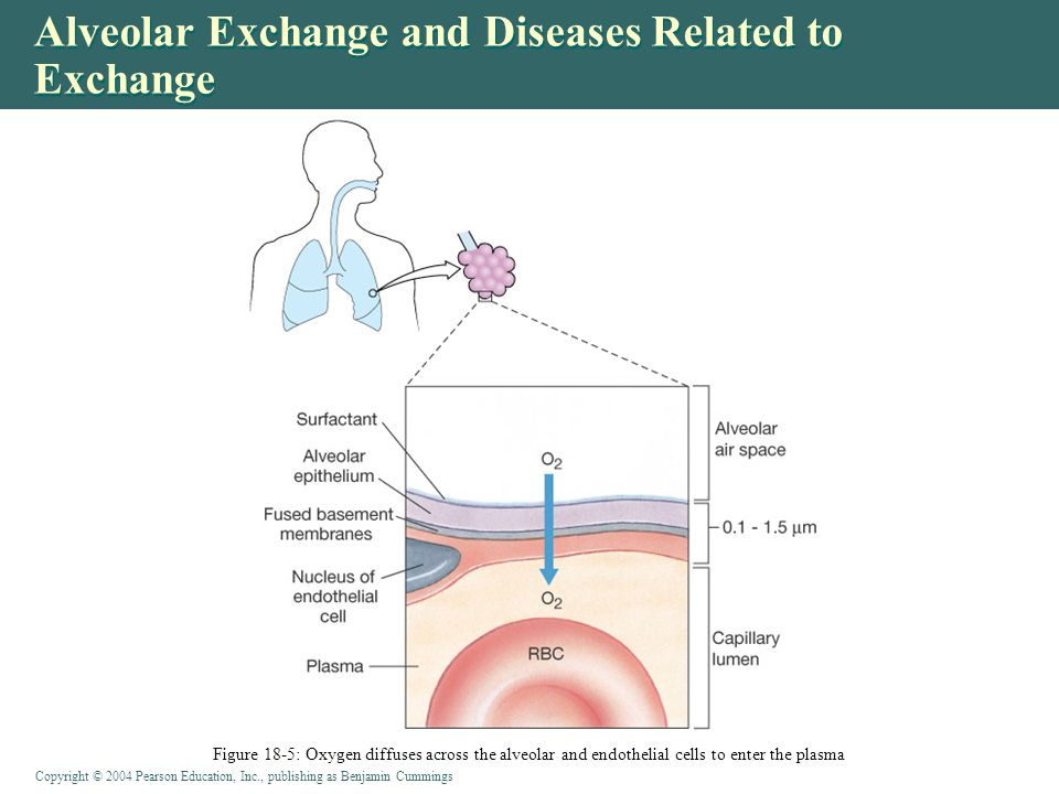 Alveolar Exchange and Diseases Related to Exchange