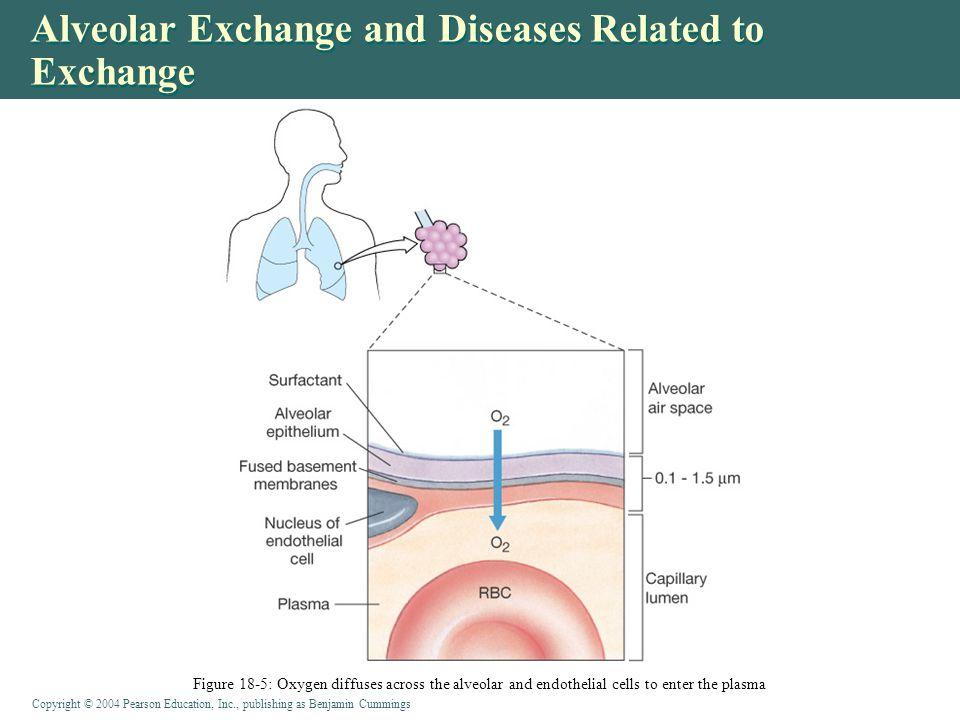 Alveolar Exchange and Diseases Related to Exchange
