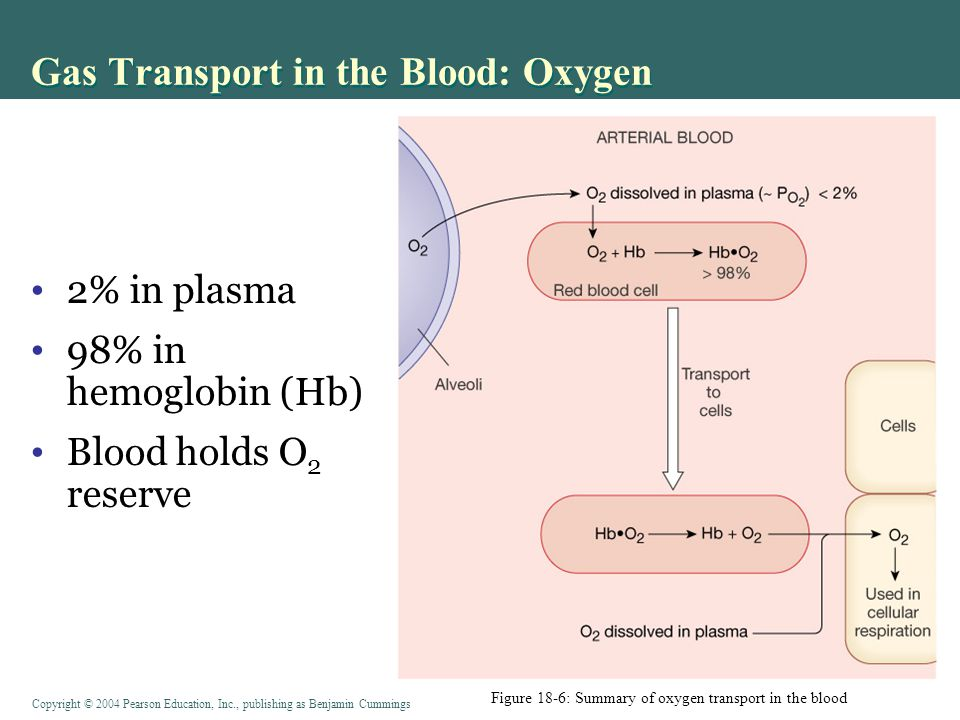 Gas Transport in the Blood: Oxygen