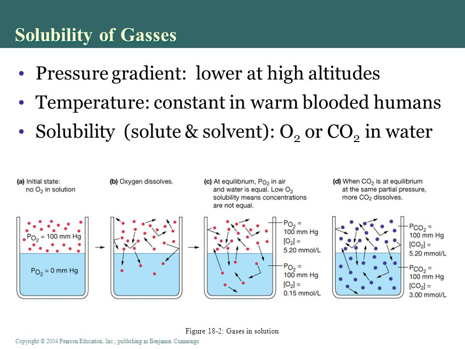 Figure 18-2: Gases in solution