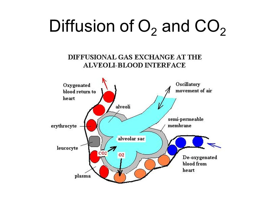 Diffusion of O2 and CO2
