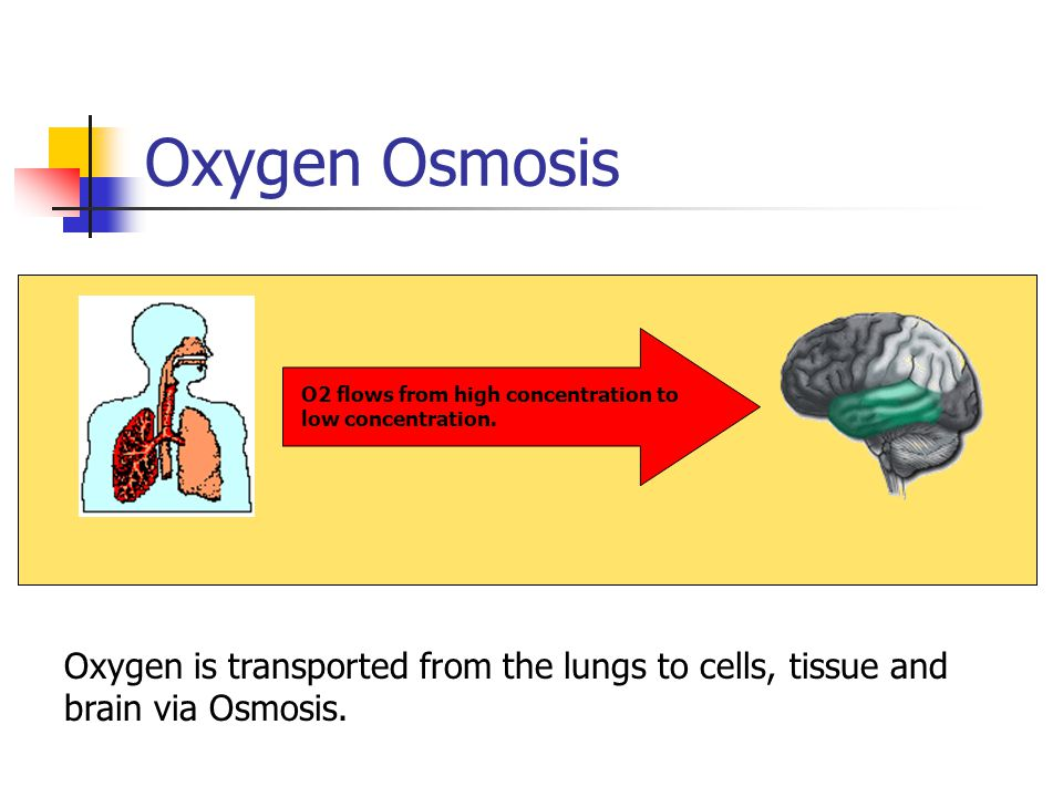 Oxygen Osmosis O2 flows from high concentration to low concentration. O2 flows from high concentration to low concentration.