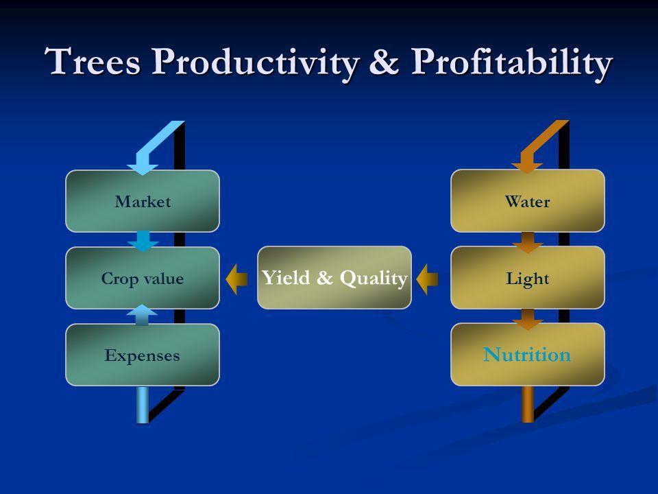 Trees Productivity & Profitability