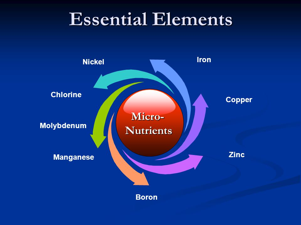 Essential Elements Micro- Nutrients Iron Nickel Chlorine Copper