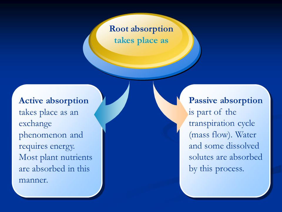 Passive absorption is part of the transpiration cycle (mass flow)