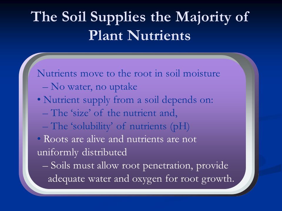 The Soil Supplies the Majority of Plant Nutrients