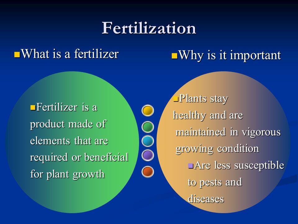 Fertilization What is a fertilizer Why is it important Plants stay