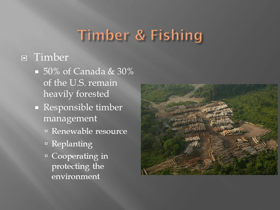 Timber & Fishing Timber