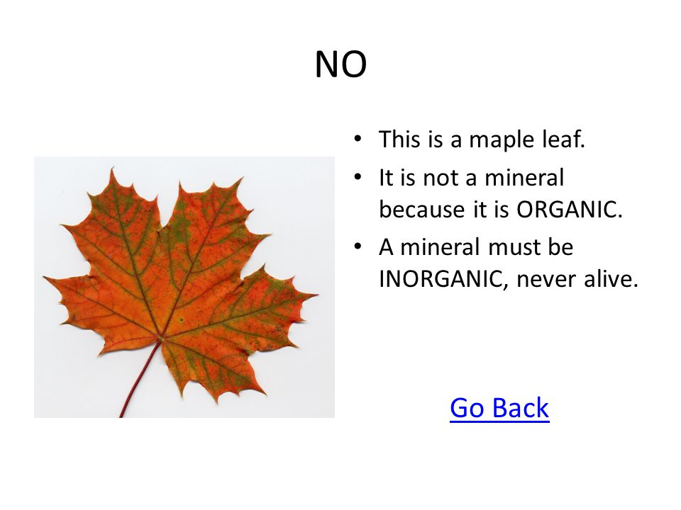 NO Go Back This is a maple leaf.