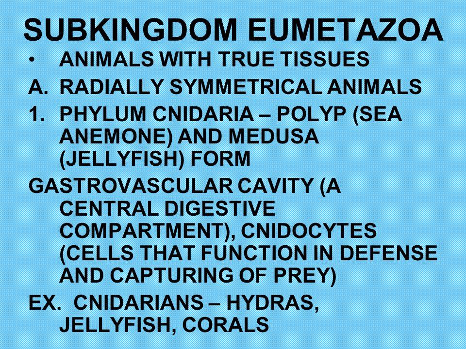SUBKINGDOM EUMETAZOA ANIMALS WITH TRUE TISSUES