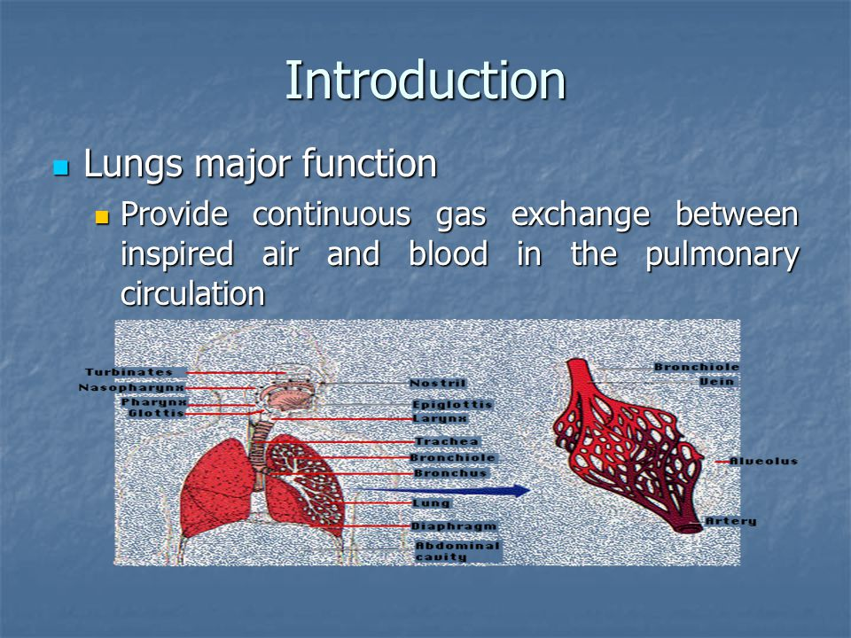 Introduction Lungs major function