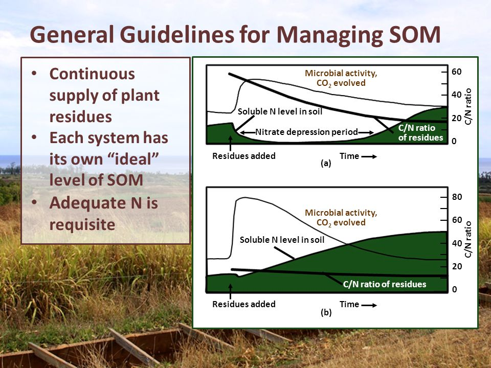 General Guidelines for Managing SOM