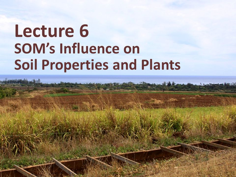 Lecture 6 SOM's Influence on Soil Properties and Plants