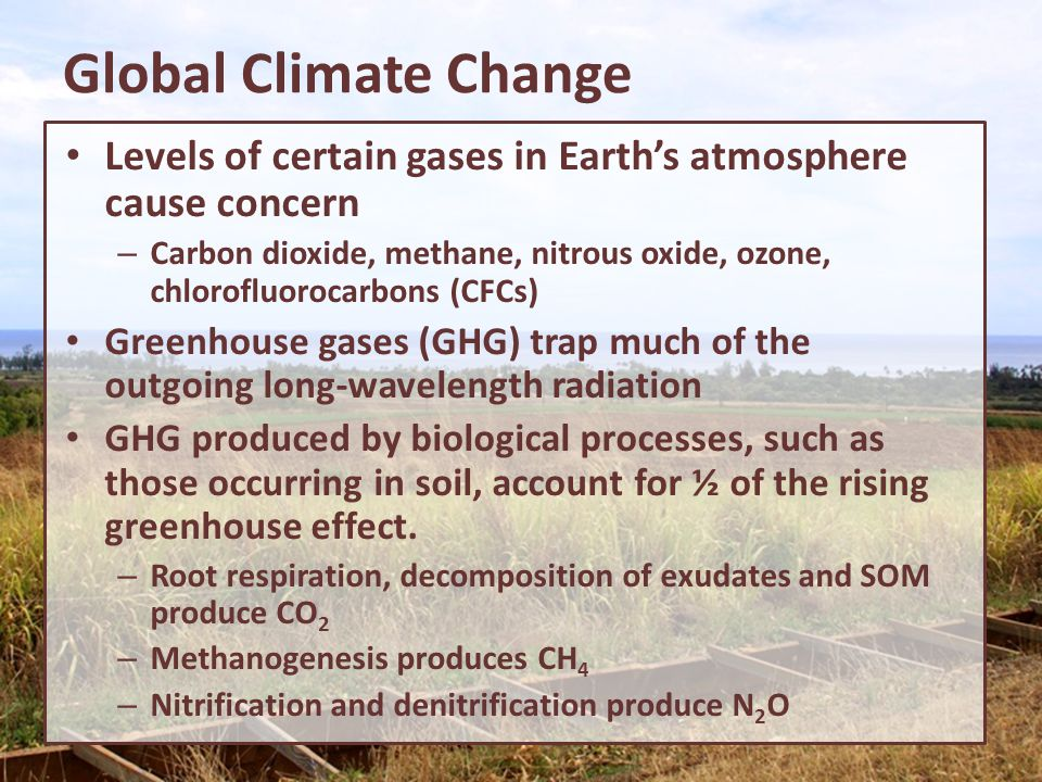 Global Climate Change Levels of certain gases in Earth's atmosphere cause concern.