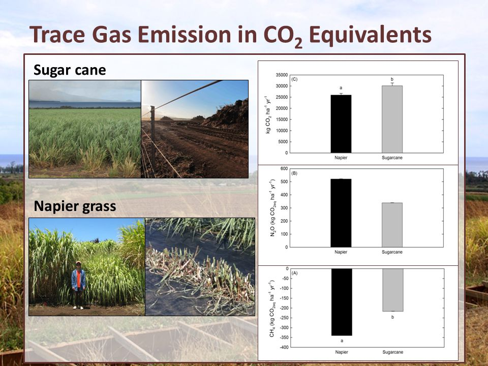 Trace Gas Emission in CO2 Equivalents
