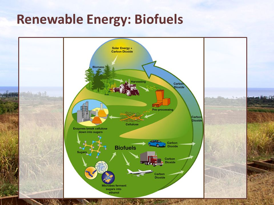 Renewable Energy: Biofuels