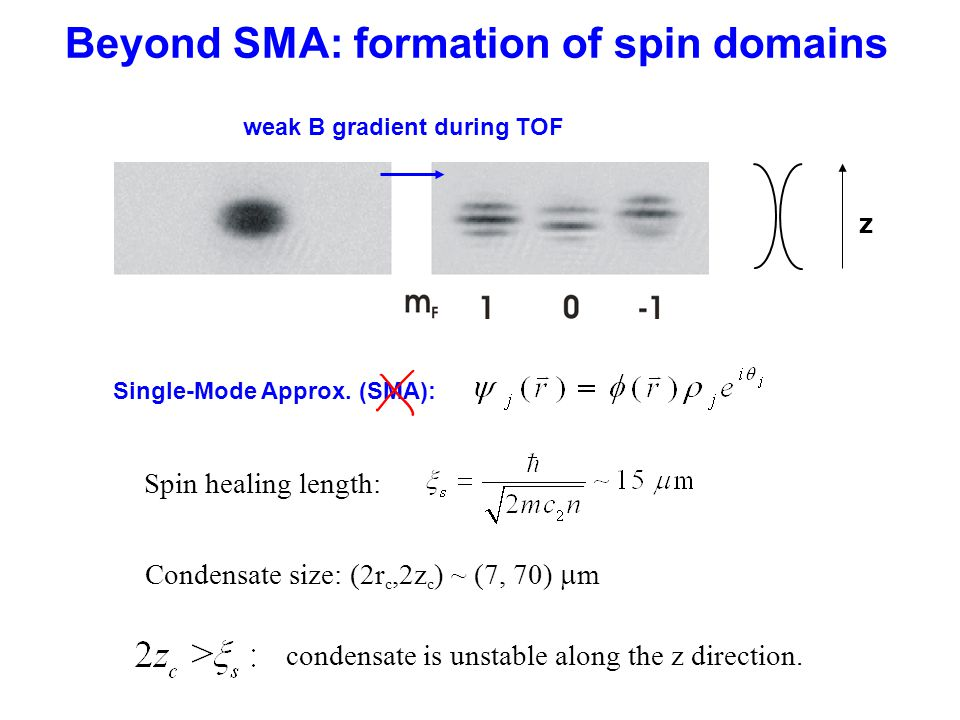 Beyond SMA: formation of spin domains