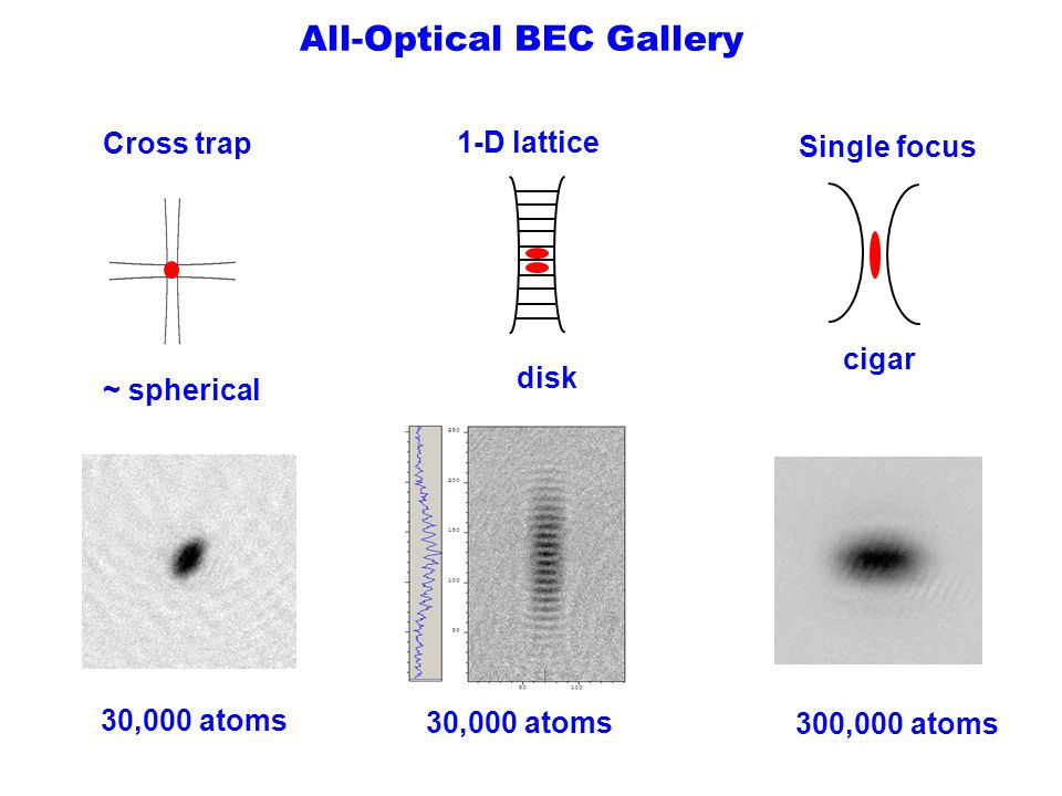 All-Optical BEC Gallery
