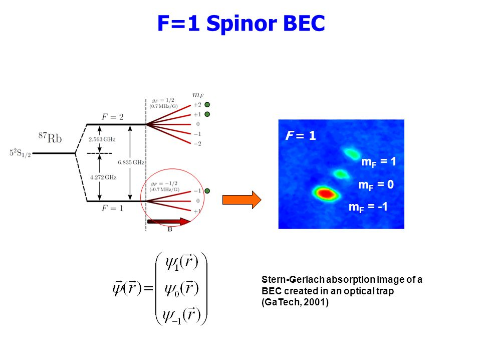 F=1 Spinor BEC F = 1 mF = 1 mF = 0 mF = -1