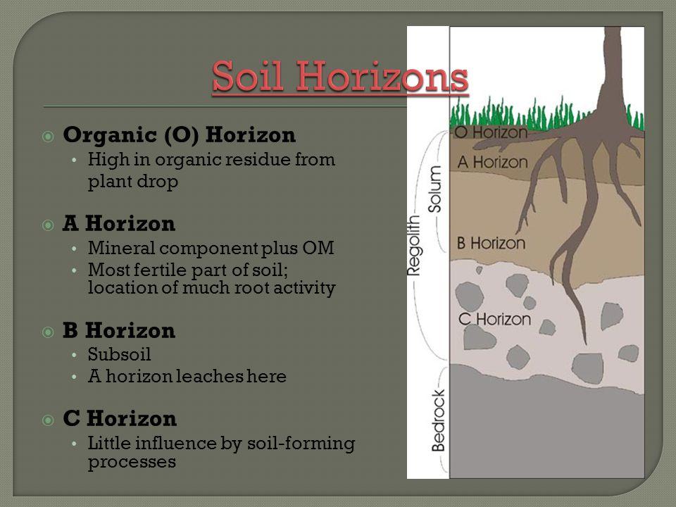 Soil Horizons Organic (O) Horizon A Horizon B Horizon C Horizon