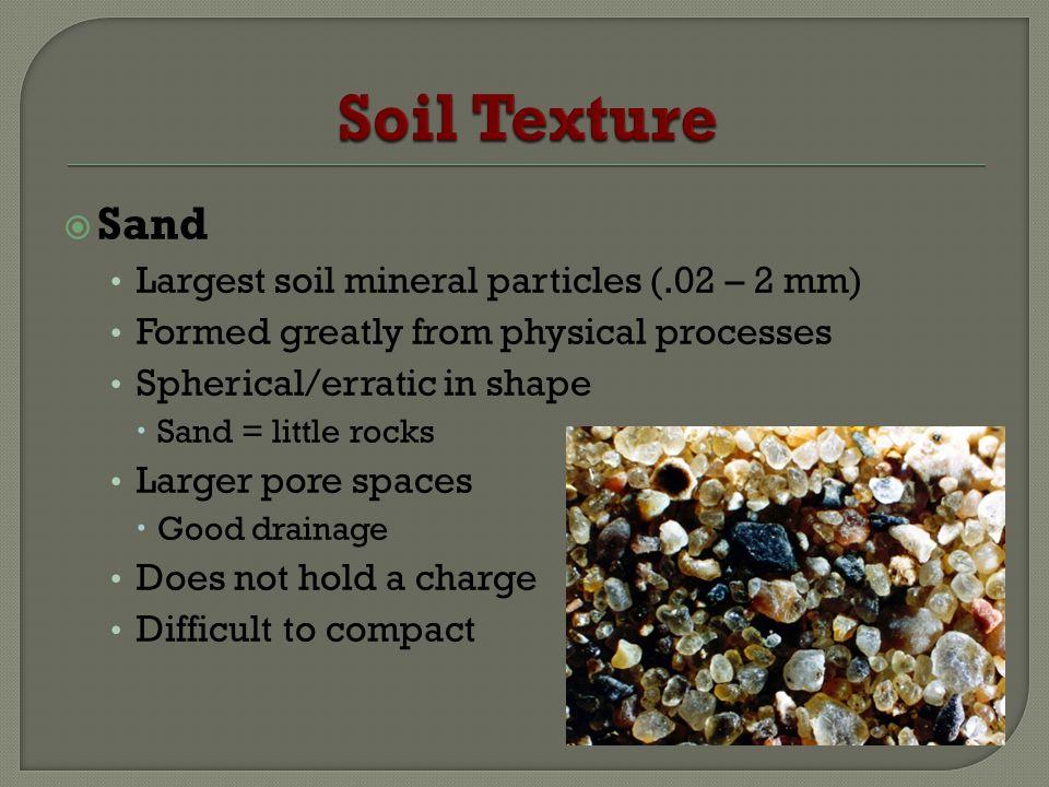 Soil Texture Sand Largest soil mineral particles (.02 – 2 mm)