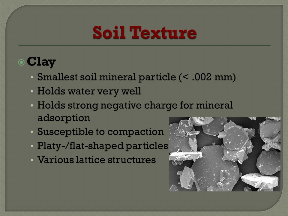 Soil Texture Clay Smallest soil mineral particle (< .002 mm)