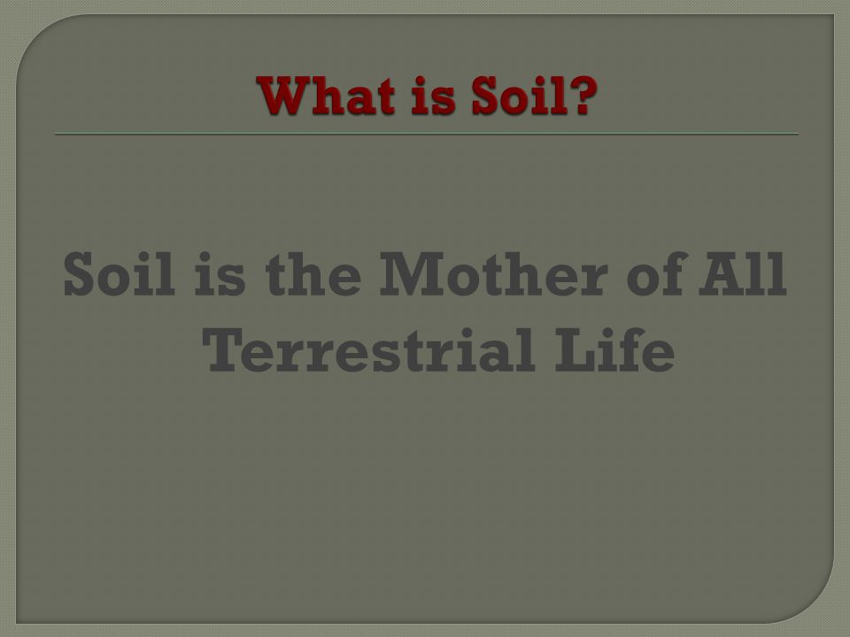 Soil is the Mother of All Terrestrial Life