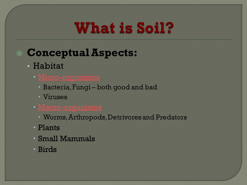 What is Soil Conceptual Aspects: Habitat Micro-organisms