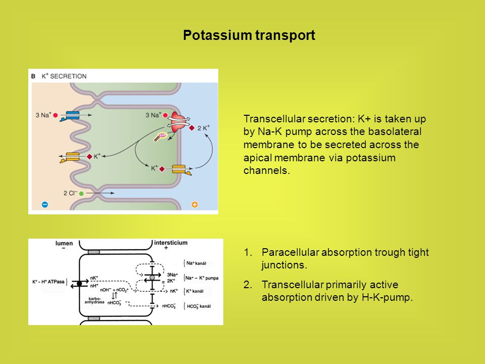 Potassium transport