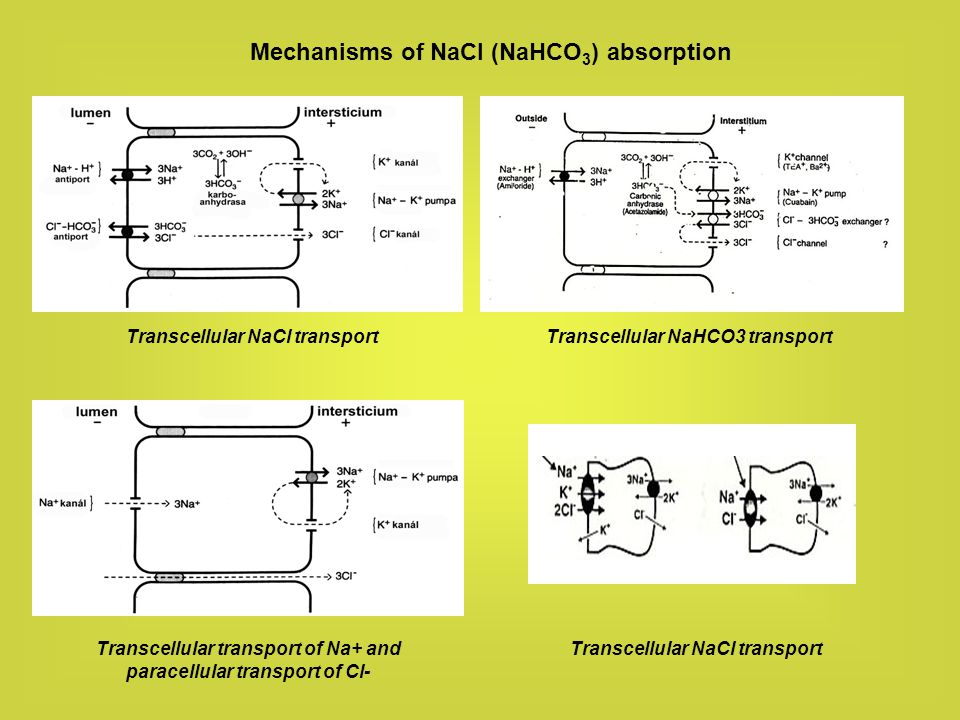 Mechanisms of NaCl (NaHCO3) absorption
