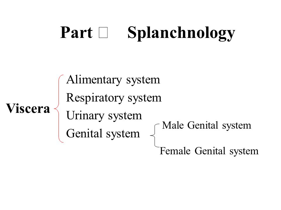 Alimentary system Respiratory system Urinary system Genital system