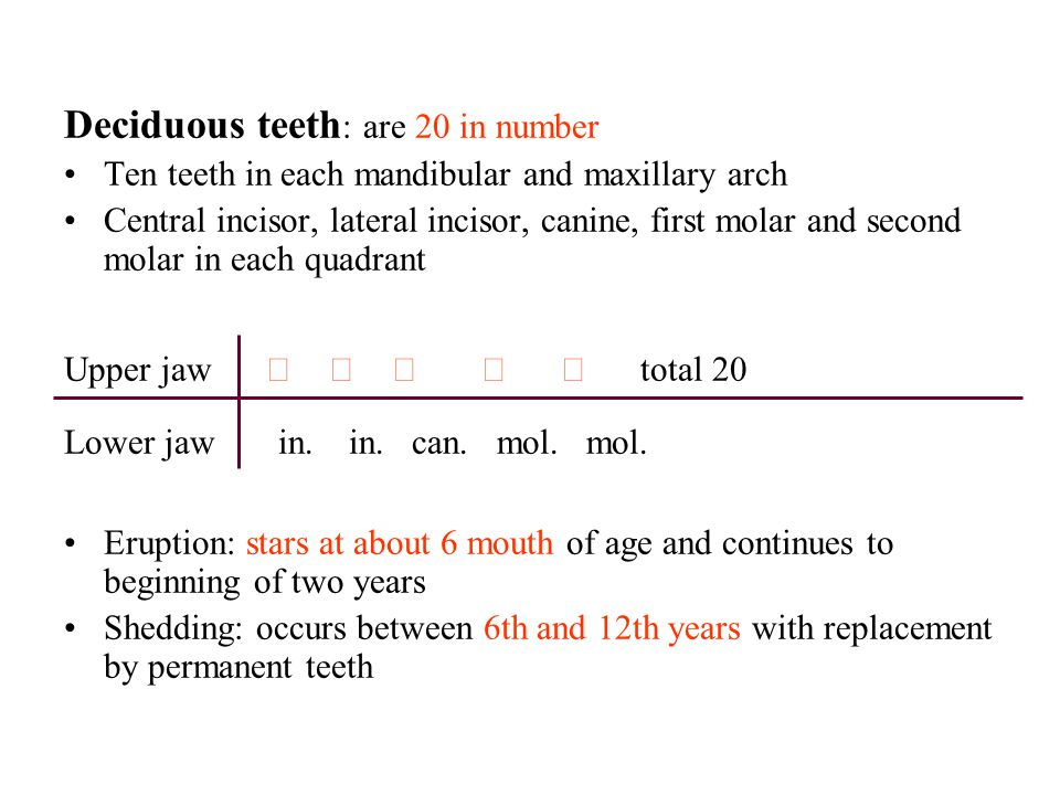 Deciduous teeth: are 20 in number