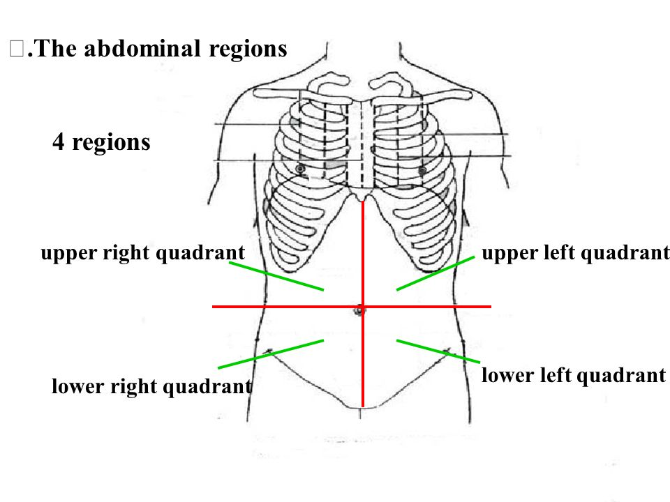 Ⅱ.The abdominal regions