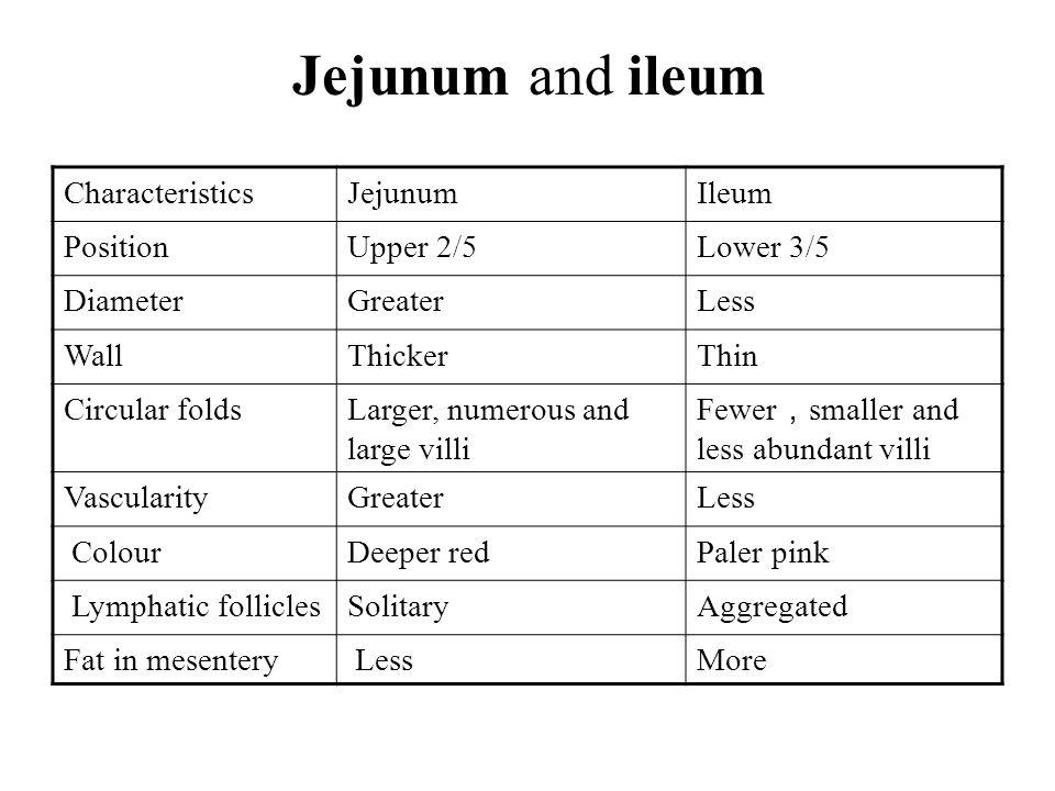 Jejunum and ileum Characteristics Jejunum Ileum Position Upper 2/5