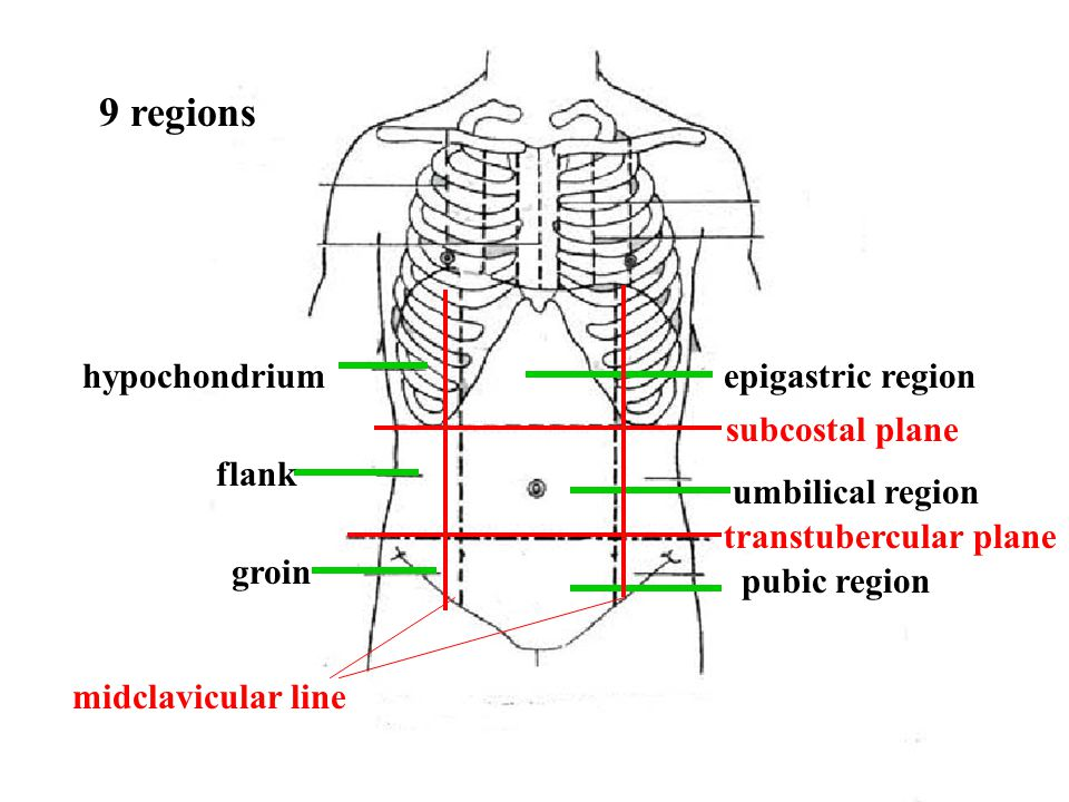 9 regions hypochondrium epigastric region subcostal plane flank