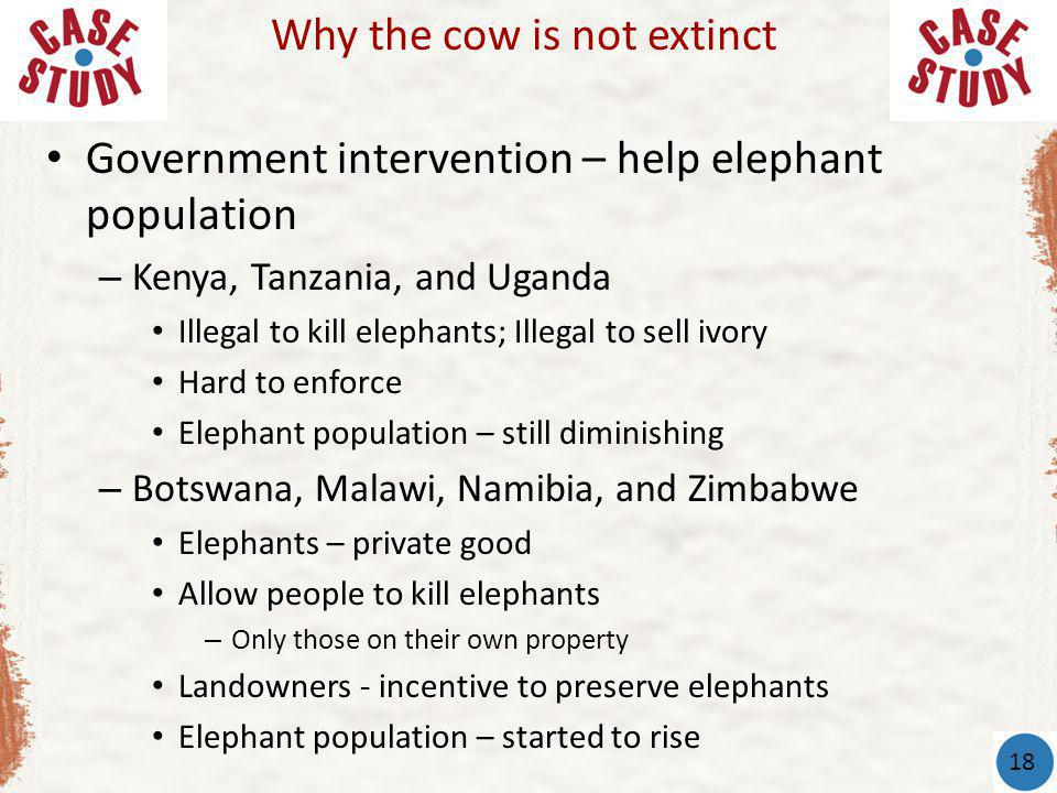 Why the cow is not extinct